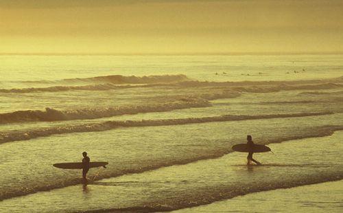 Jerseysurfers