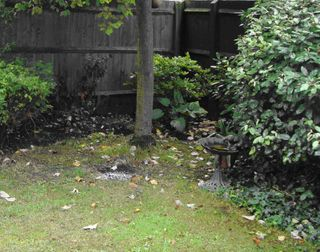 Communal back garden in London