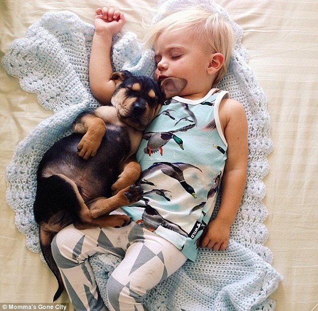 Snoozing: After that, Theo started sneaking into the bedroom at nap time to hop on the bed with Beau