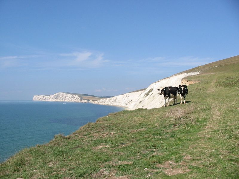 Isle of Wight – Cliff tops – please credit Isle of Wight AONB