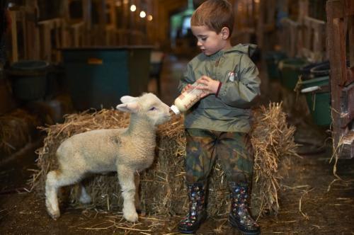 The-Olde-House_Lambing_lamb_SMM3383
