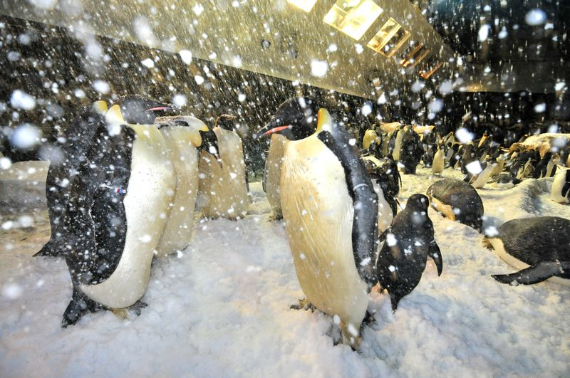 Penguins_seaworld
