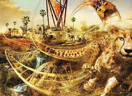 CheetahBuschGardens