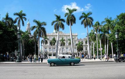 Havanapalmsf1902_428x269
