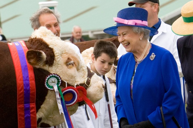 Carol Stevens - Great Yorkshire Show