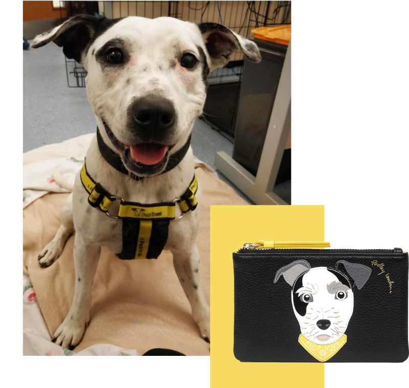 Radley_DogsTrust_Blog_Nov_18_Tile-4