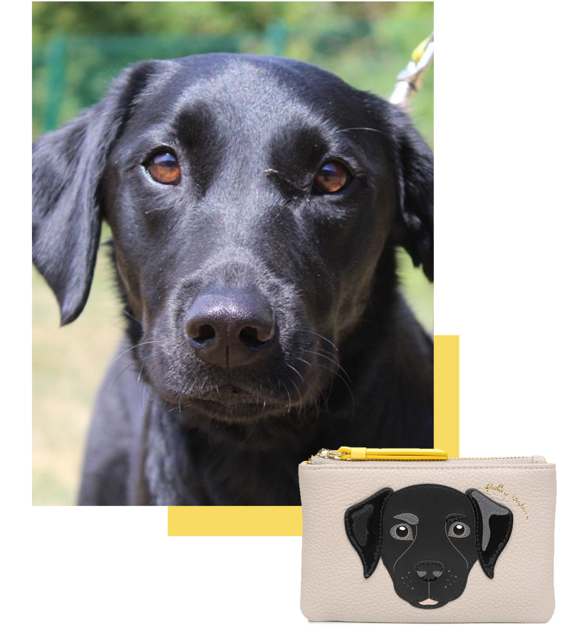 Radley_DogsTrust_Blog_Nov_18_Tile-6