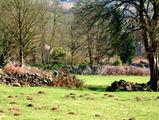 Gloucestershire_field