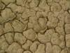 Cracked_mud